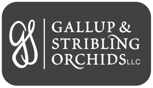 gallup-stribling orchids